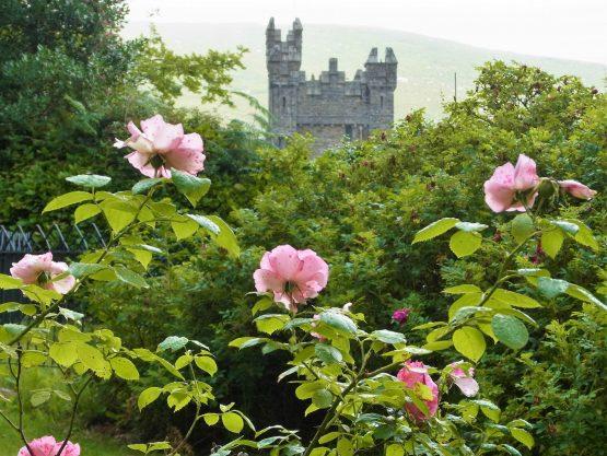 Fahrten 2018 Irland 42 Glenveagh Castle RFH R0042868 555x417 - Irland 2018