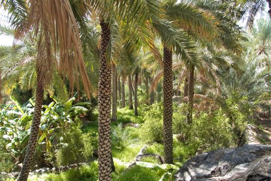 Fahrten 2019 Oman 21 Misfah RFH R0044683 555x370 - Oman 2019