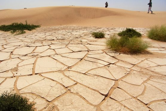 Fahrten 2019 Oman 63 Rub al Khali RFH R0045377 555x370 - Oman 2019