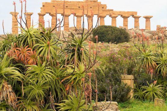 Fahrten Sizilien 2018 44 Selinunte Akropolis Heraklestempel RFH R0039707 555x370 - Sizilien 2018